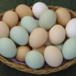 Eggs – Everything you need to know