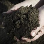 Soil and the Organic Garden