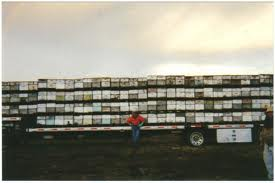 truck of bees
