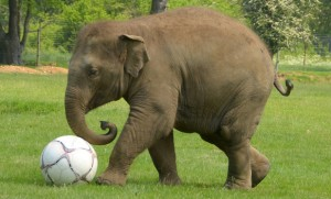 Elephant-with ball
