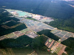 Shrimp farm aerial original.jpg