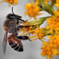 Bee Deaths Affect Our Crops