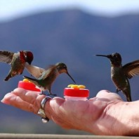How To Train Hummingbirds To Eat From Your Hand